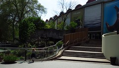 134 - 2017 05 06 - Gerenoveerde trappen tussen berenverblijven