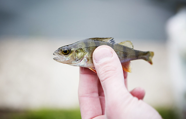 Fishing_30