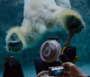 Photo:Polar Bear And High-five By
