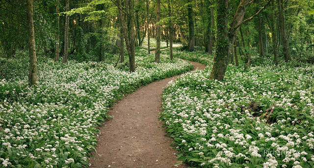 A Scented Path