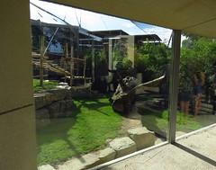 283 - 2017 06 10 - Zicht op gorillaverblijf in aanbouw door kijkruit