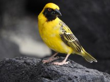 The Worlds Best Photos of bird and mauritius Flickr