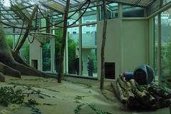 336 - 2017 07 01 - Doorgangen voor gorilla's van hun binnenverblijf naar het buitenverblijf