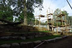 297 - 2017 06 10 - In het gorillaverblijf in aanbouw