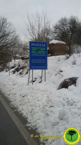 Terremoto Centro Italia 2017_062