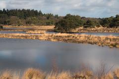 landschap 1 Leo Reijnen