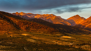 Olivos - pinos - montañas