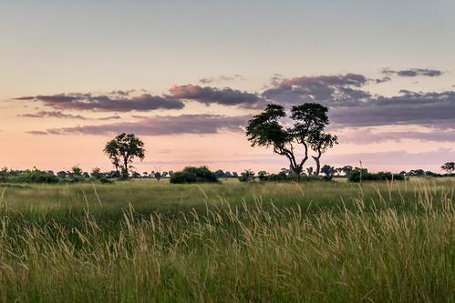 Afrique-Delta de l'Okavango