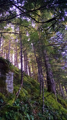 IMG_20150305_120510843-gorge-hike-trees