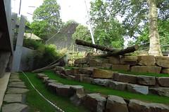 298 - 2017 06 10 - In het gorillaverblijf in aanbouw
