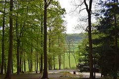 Little Log view