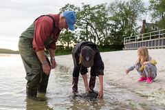 Horseshoe crabbing