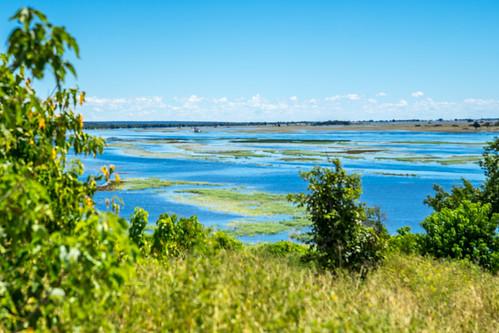 Afrique-Botswana- Chobe national parc