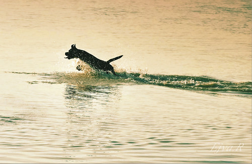 Dog Summer Bathing / Strandolás Kutya Nyár