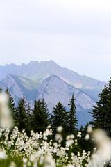 Heidiweg Pizol, Schweiz