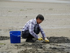 Searching for clams