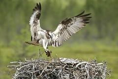 Nest needs rebuilding