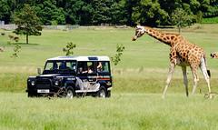 Woburn Safari Park UK