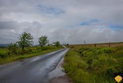 Scotland -15