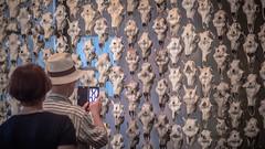 300 Rentierschädel rufen zum Protest Die samische Kunstaktivistin Máret Ánne Sara auf der documenta 14