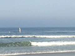 At the beach, humpback whale, Gene paramotoring, and another whale out of the water