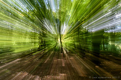 """zooming forest • <a style=""""font-size:0.8em;"""" href=""""http://www.flickr.com/photos/73234388@N04/37348680142/"""" target=""""_blank"""">View on Flickr</a>"""