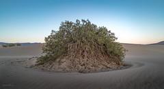 Mesquite Flat Dunes #5