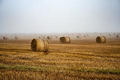 Hay Bales near Perth