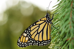 Fall Butterfly Adventure