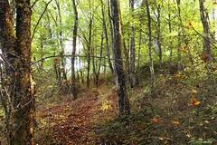 Bosque do Castrelo Leboreiro