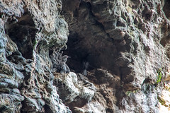 Cueva Valdez, Santa Cruz Island