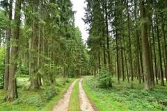 Path thru German forests