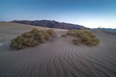 Mesquite Flat Dunes #4