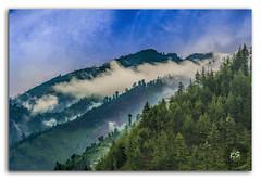 Scenic deep tropical forest jungle Janjehli, Himalayas, India