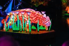 Tiger lantern