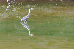 T'as vu mon reflet dans sur l'eau? - Did you see my reflection on the water?