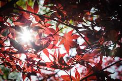記得是東京鐵塔下|楓紅
