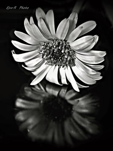 Virág tükör / Flower Mirror