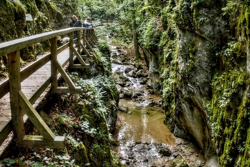 Hiking Forest Gorge / Túra Erdő Szurdok
