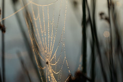 Light beads