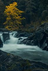 Salmon Cascades, Olympic National Park