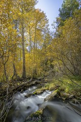 Fall Foliage: The June Lake Loop
