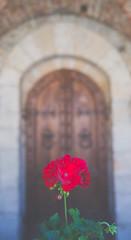 Napa Valley Castle Flower