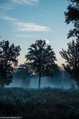 Dawning Trees