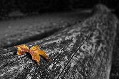 """Automne • <a style=""""font-size:0.8em;"""" href=""""http://www.flickr.com/photos/138980692@N07/37027149783/"""" target=""""_blank"""">View on Flickr</a>"""