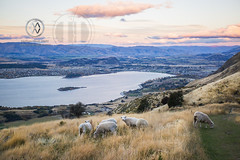 NZ17_wright9599