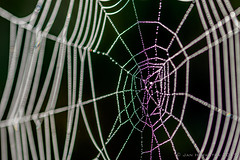 """spinneweb @ radio kootwijk • <a style=""""font-size:0.8em;"""" href=""""http://www.flickr.com/photos/73234388@N04/37247254486/"""" target=""""_blank"""">View on Flickr</a>"""