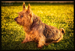"Bobby in the sunset II • <a style=""font-size:0.8em;"" href=""http://www.flickr.com/photos/58574596@N06/37795545972/"" target=""_blank"">View on Flickr</a>"