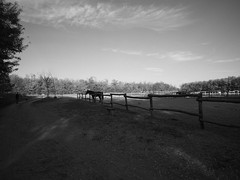 Hungarian horse ranch
