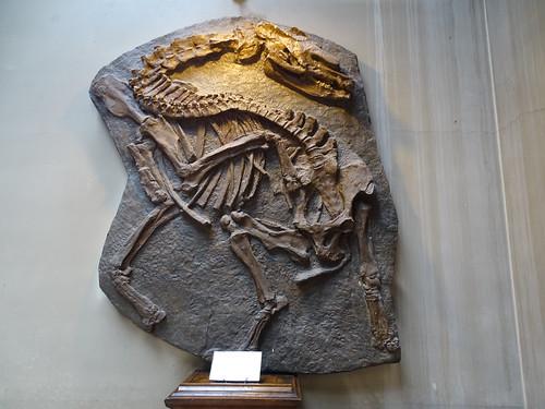 """Galerie de Paléontologie et d'Anatomie comparée Paris • <a style=""""font-size:0.8em;"""" href=""""http://www.flickr.com/photos/160223425@N04/27081183159/"""" target=""""_blank"""">View on Flickr</a>"""
